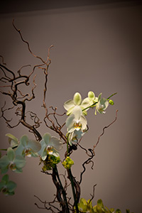 Sprawling Orchids