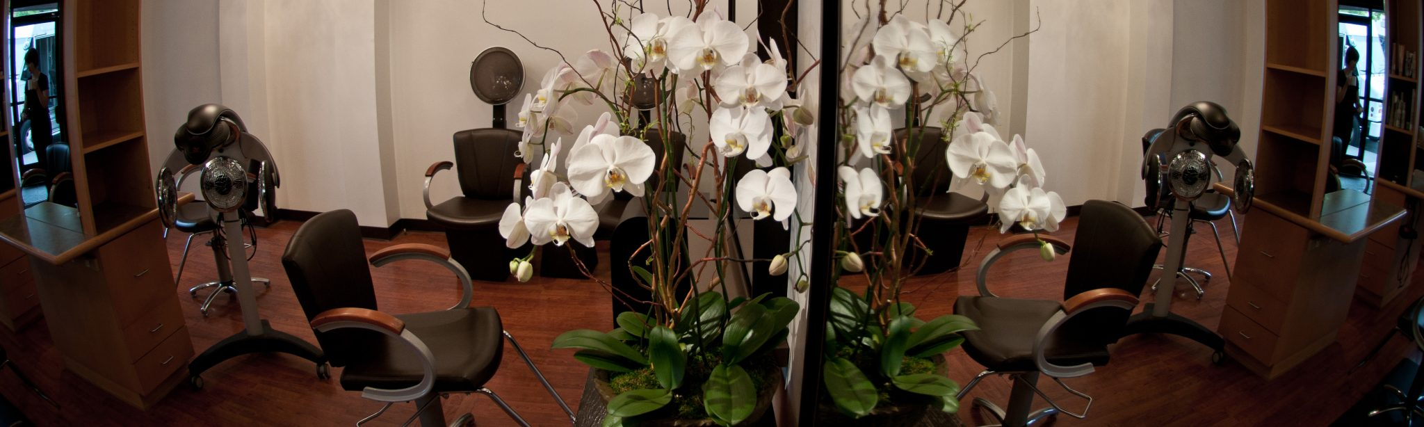White Orchids by Salon Chairs